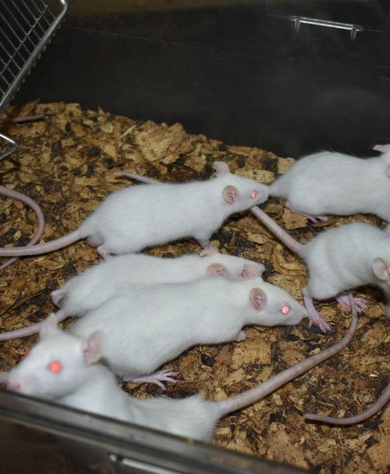 A la découverte de l'animalerie de l'Université Joseph KI-ZERBO
